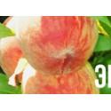 Персик Ирганайский поздний